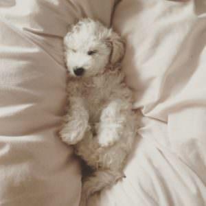 Leni sleeping
