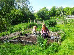 Via: Bevendean Community Garden Blog