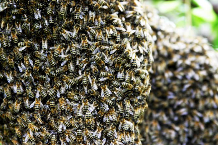 Bees in Brighton: What to Do When You See a Swarm