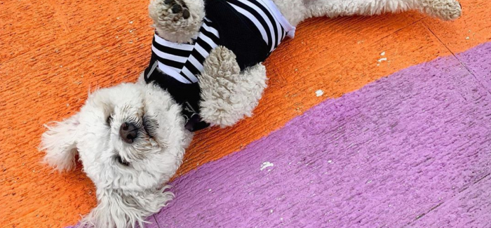 The best of Brighton on Instagram: 31 July – 06 August
